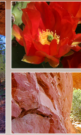 Red rocks and cactus flowers blooming in the sun